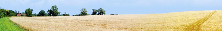 Nông nghiệp